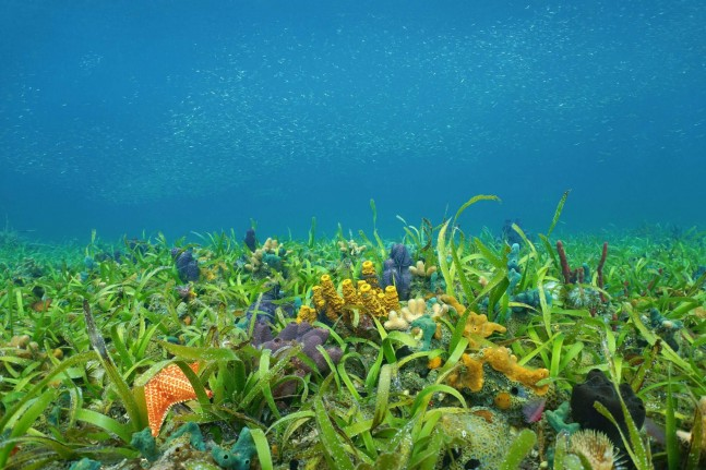 Under water seagrass and coral