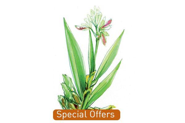 Special Offers_organic_florameaustralia