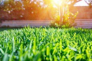 fresh green grass lawn in sunlight
