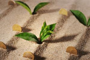 money grow wealth garden abundance healthy coin cash