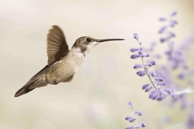 hummingbird flower nature bird happy free meaning life love