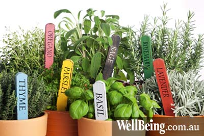 bigstock-seven-kinds-of-potted-garden-h-29374184