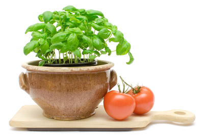 bigstock_Basil_And_Tomatos_