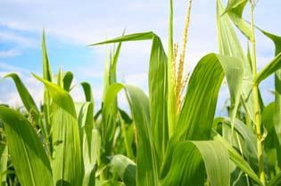 biodynamic_farming_wellbeingcomau