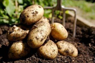 potato_food_wellbeingcomau