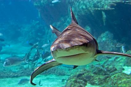 sharks_extinction_planet_wellbeingcomau