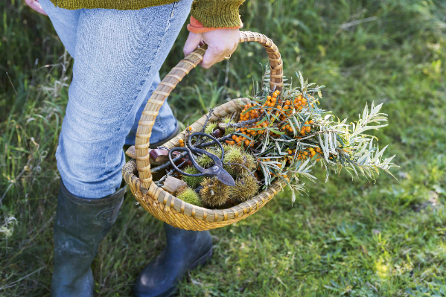 Food Forager With a Basket of Foraged Food