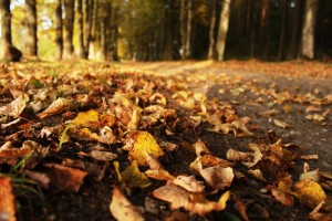 autumn leaves on the street