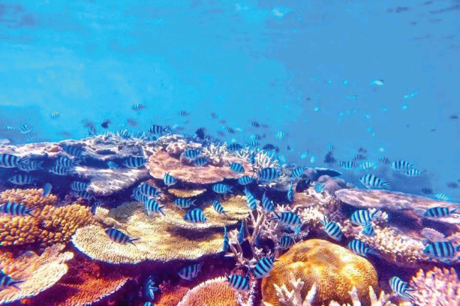 coral reef fish blue ocean sea