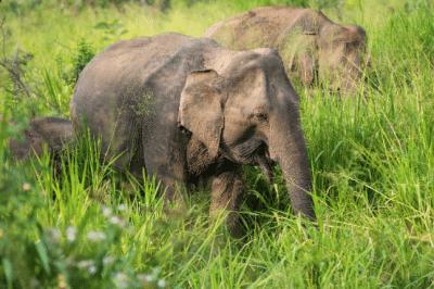 Striking Sri Lankan elephant safari