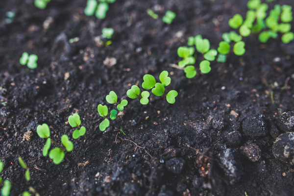 happy soil