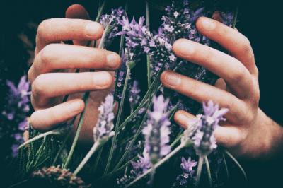 lavender healing calm women herb