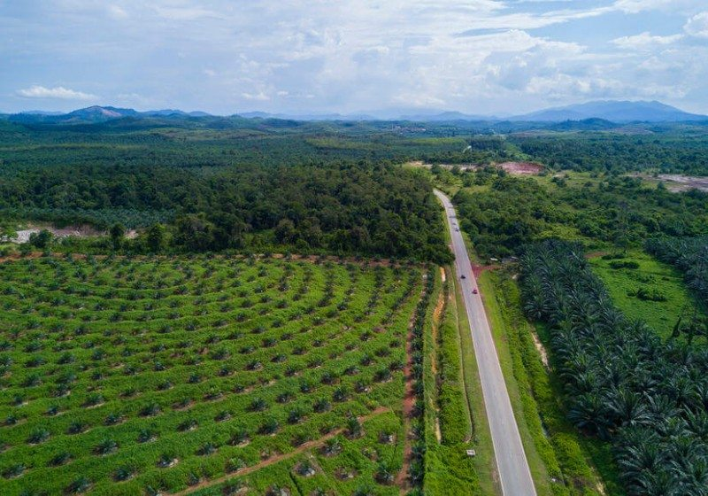 Arial view of protected oil palm plantation on east Asia.