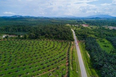 Arial view of oil palm plantation on east Asia.