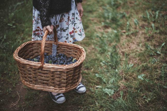 plum garden grow healthy happy
