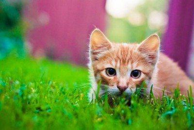 little kitten playing in grass