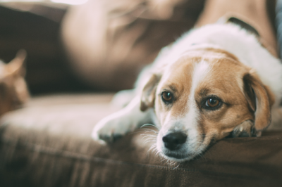 Is your dog or puppy sad or suffering from anxiety?