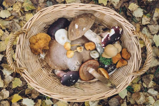 mushroom food forage find garden