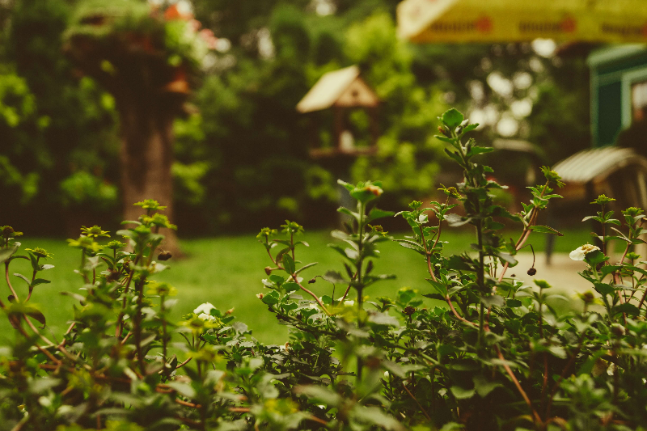 5 ways to feng shui your garden and why you should