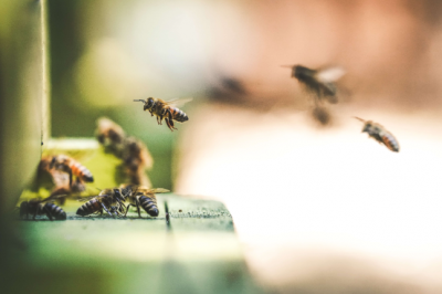 Ever thought about keeping bees? Learn the ins and outs of backyard beekeeping