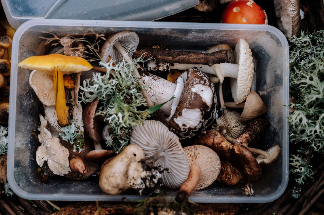 Foraging for fresh, sustainably farmed wholefood in Tasmania