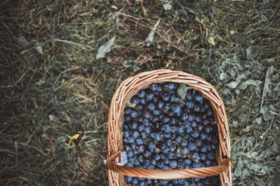 9 Australian bush foods you should be eating for your health
