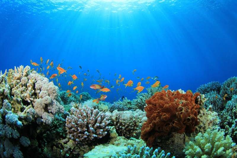 Save Download Preview Coral Reef and Tropical Fish in Sunlight