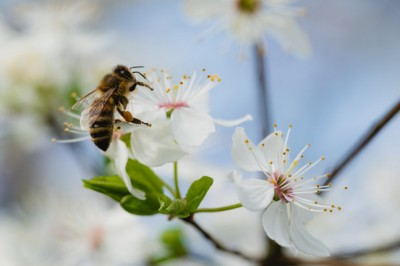 Do you want to help save the bees? Build a bee-friendly garden