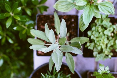How to grow your own salad greens and why you should