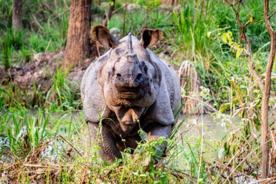 Rhinos on the rise: WellBeing travels to a Rhino refuge in Chitwan