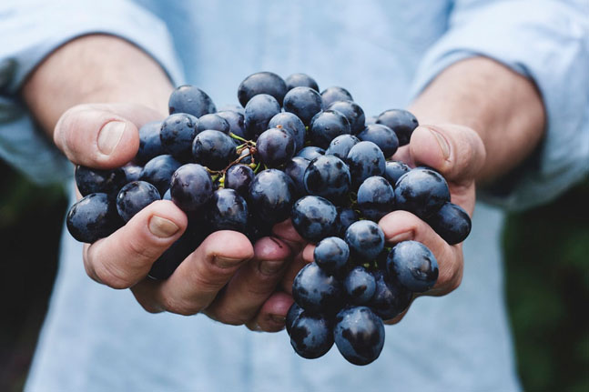 Discover the benefits of growing your own grapevine