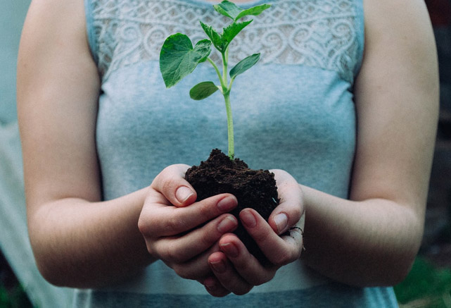 Have you ever wanted to plant a tree? Here's how you can get started