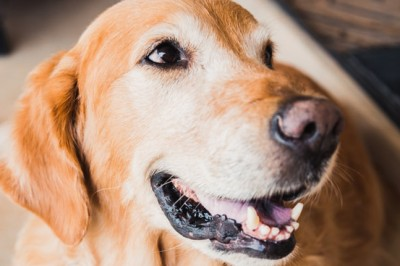 Palliative pet care: how to care for older pets to maintain their quality of life