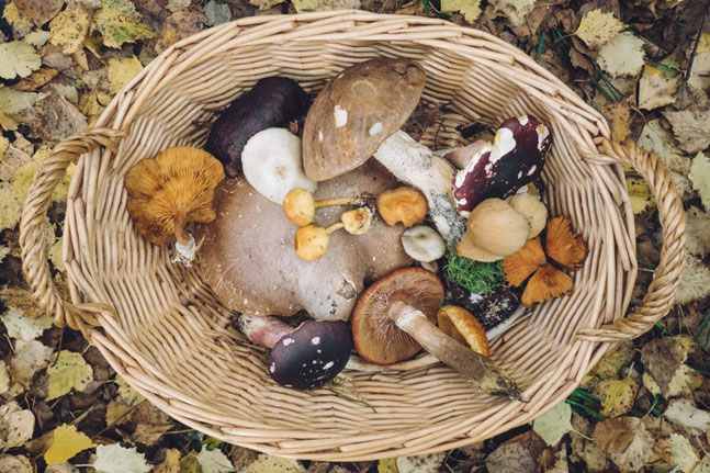 Medicinal mushrooms? We share their benefits and our favourite recipe