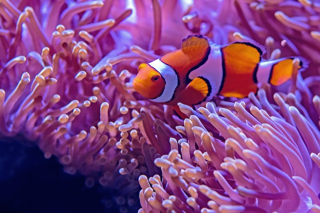 Clownfish disappearing, insects on the slide and other environmental news