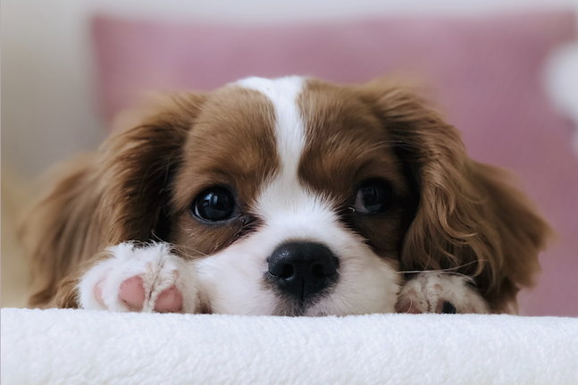 Treating skin allergies naturally on your furry friends