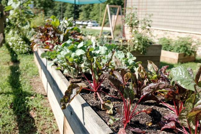 It's Time To Get Your Hands Dirty And Get Gardening