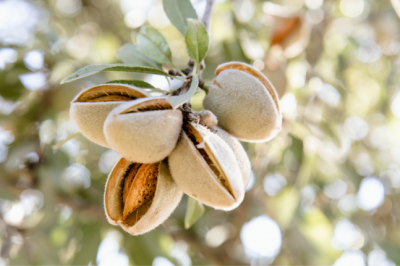 The Healing, Heart Healthy Properties Of The Humble Almond