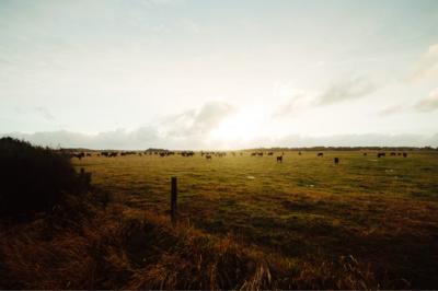 Regenerative Farming For The Future