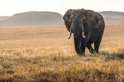 From Elephant Trails To A Planet Friendly Diet, Here's The Latest In Conservation News