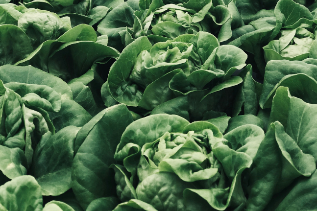 Discover The Healing, Nutritional & Digestive Benefits Of Lettuce