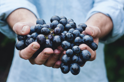The Therapeutic Benefits Of Grapes