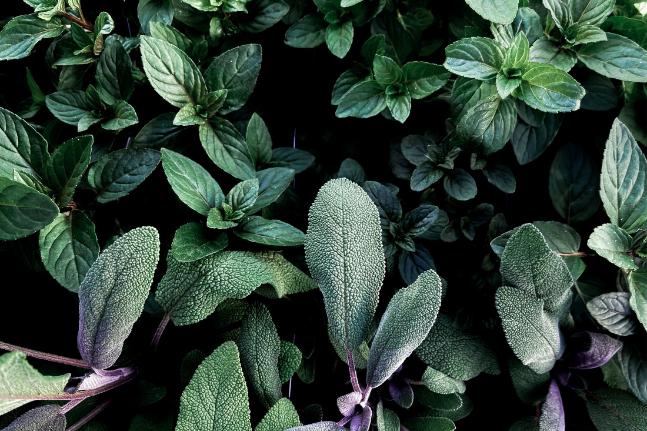 Old Fashioned herb gardening