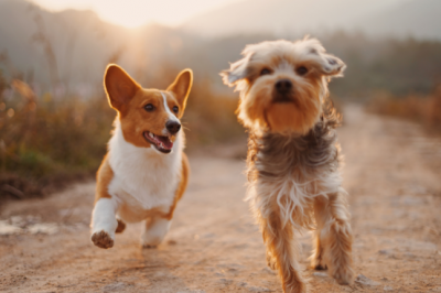 Kidney Disease In Dogs