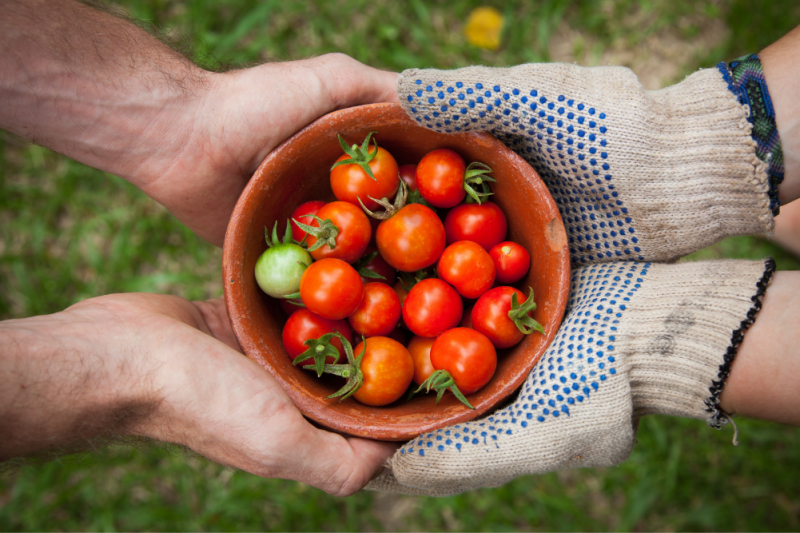 How To Create A Shared Garden