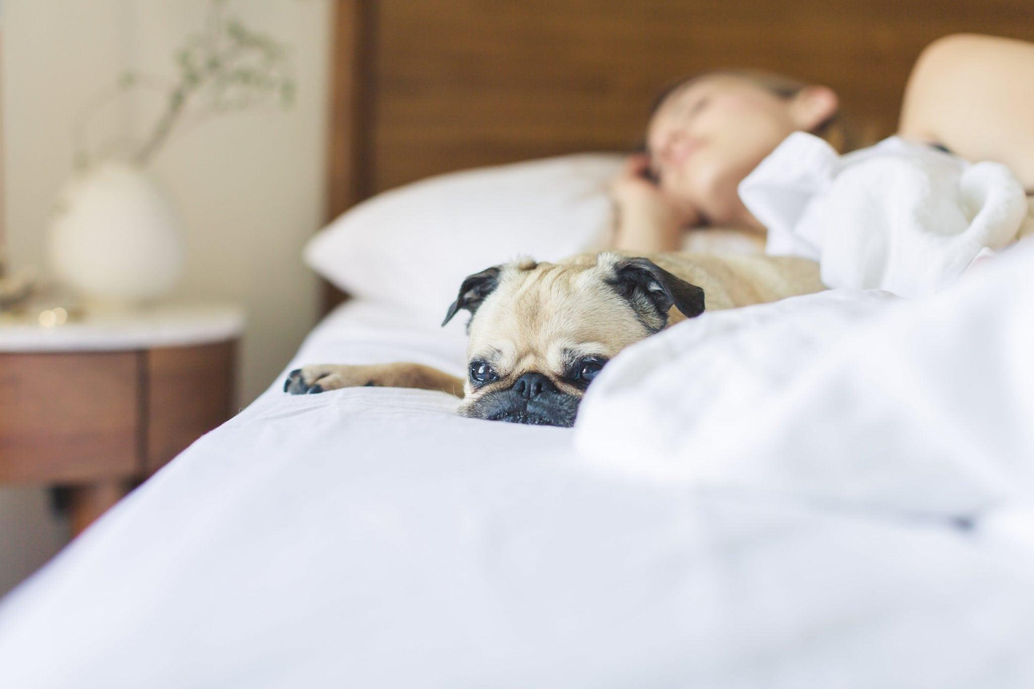 Bed Bedroom Blanket 545017